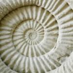 stock-photo-51935516-ammonit-prähistorische-fossil