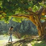 tree-690363_640