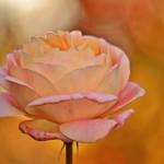 natürliche Entfaltung für innere Schönheit