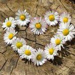 Liebe, Vertrauen, Kreativität und Frieden